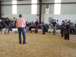 Cover photo for 4-H Livestock Show