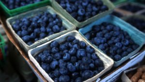 Fresh blueberries displayed in small cartons for sell at a farmers market.