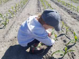 Cover photo for Crop Scouting Resources