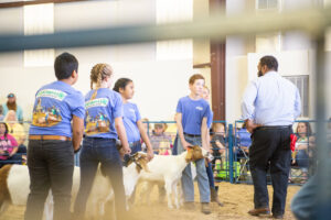 Cover photo for 2021 4-H Livestock Show and Sale Participation